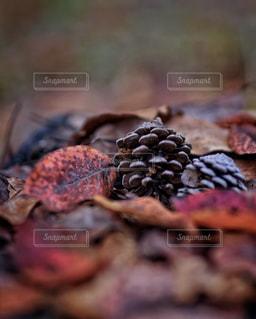 秋がやってきたの写真・画像素材[1651361]