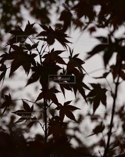 秋の影の写真・画像素材[1651377]