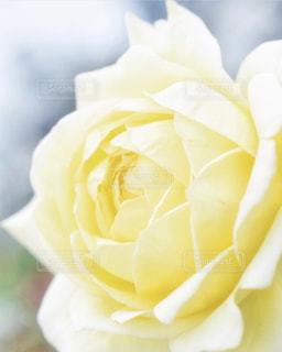 近くの花のアップの写真・画像素材[1851076]