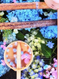 花のクローズアップの写真・画像素材[2345487]