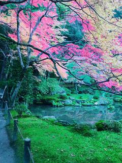 自然,秋,紅葉,京都,もみじ,池,南禅寺,水路閣,11月