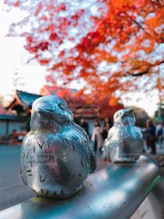 自然,秋,紅葉,京都,見上げる,南禅寺,雀,水路閣,11月,スズメ,ポール