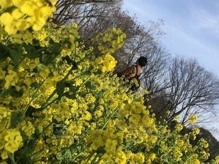 花,春,カップル,花畑,後ろ姿,菜の花,人物,背中,人,休日