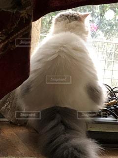 猫,冬,リビング,窓,白い,座る,写真,cat,後ろ,White,pet,眺め,瞑想,relax,もこもこ,picture,ビデオデッキ