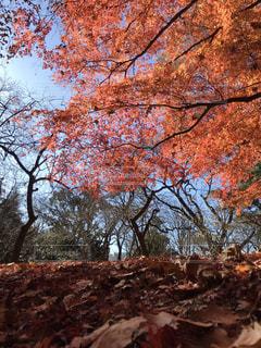 青空と秋景色の写真・画像素材[1620599]