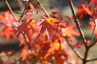 秋色の写真・画像素材[1642533]