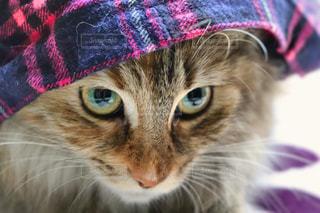 紫の帽子をかぶっている猫の写真・画像素材[1644456]