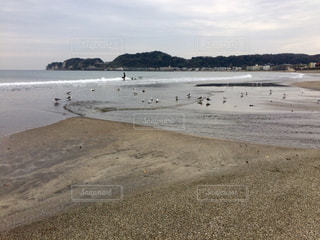 海岸にカモメの群れの写真・画像素材[1628245]