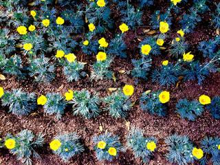公園,花,屋外,黄色,草木
