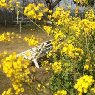 公園,花,黄色,ベンチ,景色