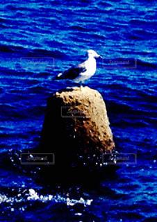 青い海で一人の写真・画像素材[2256169]