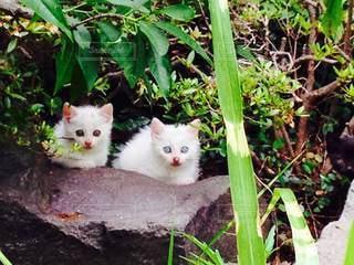 猫,風景,動物,屋外,白,鮮やか,ペット,人物,座る,草木,ネコ