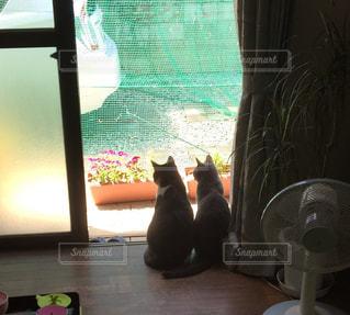 窓の前に座っている猫の写真・画像素材[1622919]