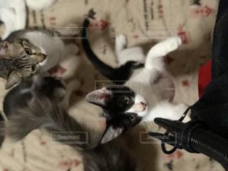 近くに猫のアップの写真・画像素材[975318]