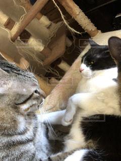 近くに猫のアップの写真・画像素材[980362]