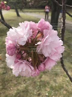 近くの花のアップの写真・画像素材[1798158]