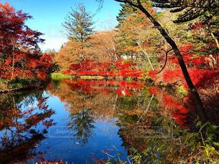 近くの木に囲まれた池のアップの写真・画像素材[1627314]