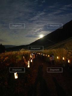 仙石原のすすきの写真・画像素材[1681489]