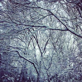 自然,冬,屋内,雪,雪景色,樹木