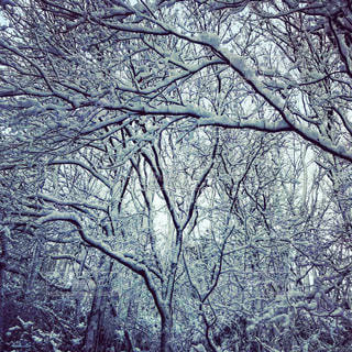 冬,雪,屋外,白,雪景色,樹木,ホワイト