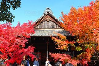 京都の紅葉の写真・画像素材[1666183]
