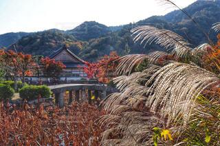 日本らしい景色の写真・画像素材[1666219]