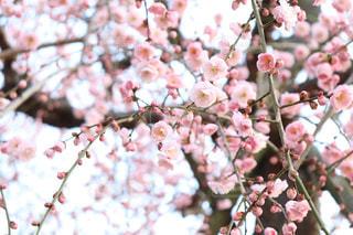 可愛いお花の写真・画像素材[1794082]