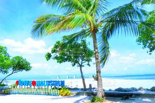 海,観光地,鮮やか,旅行,フィリピン,海外旅行,観光スポット,セブ島,日中,ナルスアン