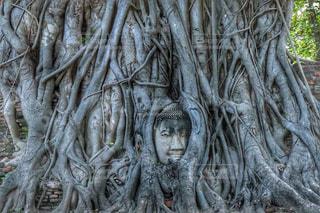 観光地,タイ,バンコク,観光スポット,アユタヤ,木の根,日中,仏頭,ワットマハタート