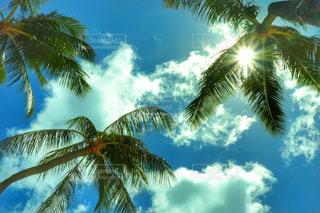 空,木,屋外,太陽,雲,日差し,旅行,ヤシの木,ハワイ,海外旅行,日中