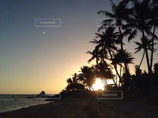 夕日,木,屋外,景色,旅行,ニューカレドニア,海外旅行