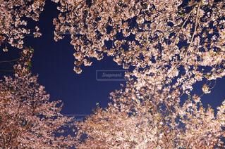 近くの木のアップの写真・画像素材[1831979]