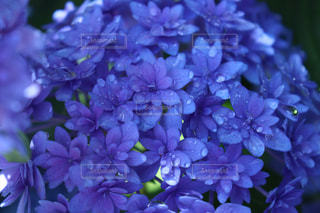 植物の上の紫色の花のクローズアップの写真・画像素材[2114296]