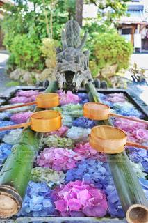 楊谷寺の花手水の写真・画像素材[2379204]