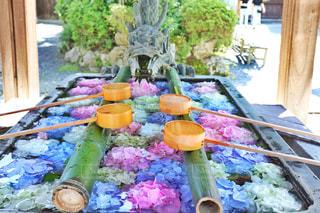 楊谷寺の花手水の写真・画像素材[2379206]