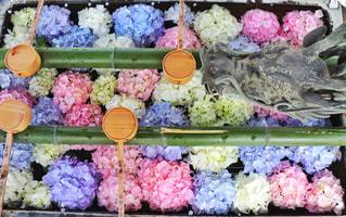 楊谷寺の花手水の写真・画像素材[2379211]