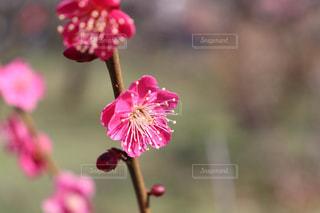 花のクローズアップの写真・画像素材[3018020]