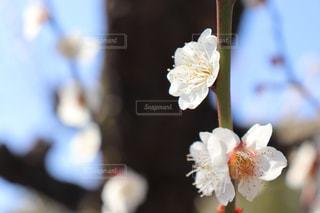 花のクローズアップの写真・画像素材[3018179]