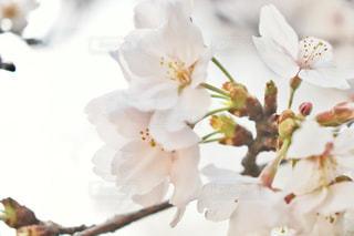 花のクローズアップの写真・画像素材[3058188]