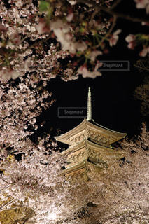 夜桜の写真・画像素材[3080145]