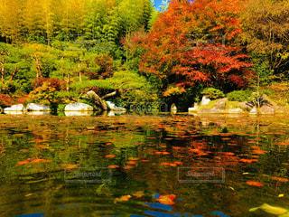 木々 に囲まれた水の紅葉の写真・画像素材[1629413]
