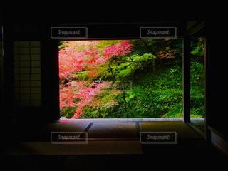 窓辺から切り取られた紅葉の写真・画像素材[1629551]