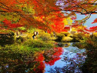 紅葉に囲まれた池の写真・画像素材[1629648]
