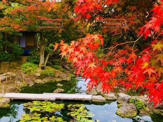 池と紅葉🍁の写真・画像素材[1629750]