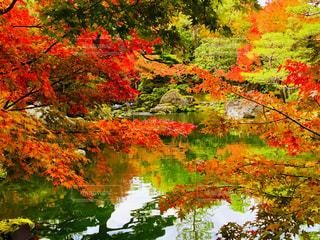 由志園の秋🍁の写真・画像素材[1629921]