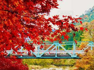 橋と紅葉🍁の写真・画像素材[1630367]