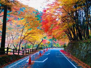 道路の秋🍁の写真・画像素材[1630397]