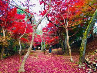 尾関山公園🍁の写真・画像素材[1631477]