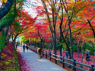 尾関山公園🍁の写真・画像素材[1631747]