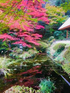 吉水園の紅葉の写真・画像素材[1642221]